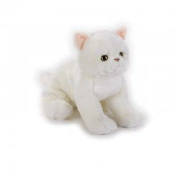National Geographic Kids Exotic Shorthair Kitten Ngs Cats Plush Toy 770672 8004332706724