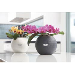 Lechusa LECHUZA ΑΥΤΟΠΟΤΙΖΟΜΕΝΗ ΓΛΑΣΤΡΑ PURO 20 Color flamingo All-in-One Set 13368 4008789133687
