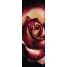 Schmidt Παζλ 1000 Alan Shapiro - Πολύτιμο τριαντάφυλλο 59327 4001504593278
