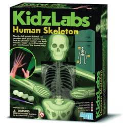 4M 4Μ Κατασκευή Ανθρώπινος Σκελετός 3375 4893156033758
